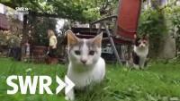 Das geheime Leben der Katzen