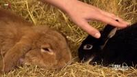 Kleintiere für Kinder