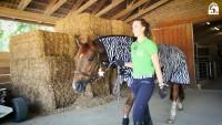 Rebeccas Tipps für Reiteinsteiger: Pferde führen und anbinden