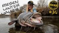 Kleine Köder, große Fische! Wallerangeln im Fluss