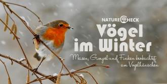 Vögel im Winter - Futterhäuschen und Meisenknödel