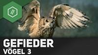 Vögel - Aufbau Gefieder / Vogelfedern