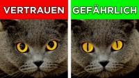 7 Katzen Signale und was sie bedeuten!