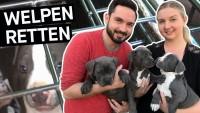 Hunde retten: Das schmutzige Geschäft mit Hundewelpen im Internet