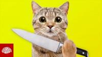Sind Katzen gnadenlose Killer?